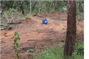 Tree Clearing Queensland